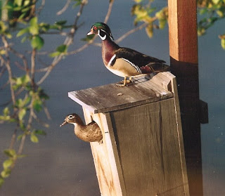 Waterfowl Nest Boxes Natural Resource Department